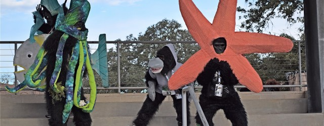 Thank you gorilla & banana runners, sponsors, volunteers and donors for making the 2017 Austin Gorilla Run a great event! The weather was ideal with a chilly start for running...